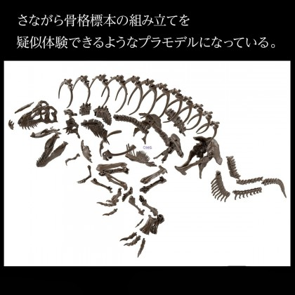 [OMGPO] Bandai 1/32 Imaginary Skeleton Tyrannosaurus 61800 (Available in July ~ August 2021)
